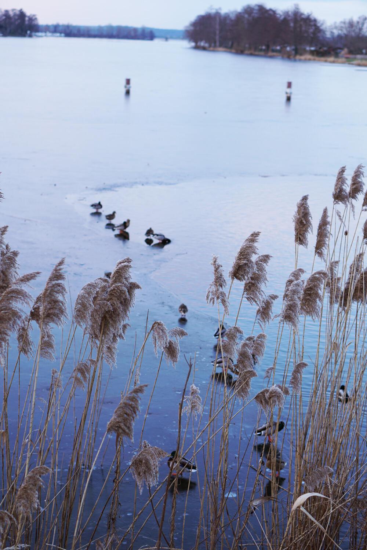 Enten See zugefroren im Winter