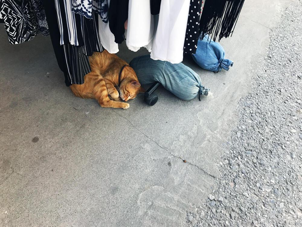 Babymoon Griechenland Urlaub Schwangerschaft Sommerurlaub Katze