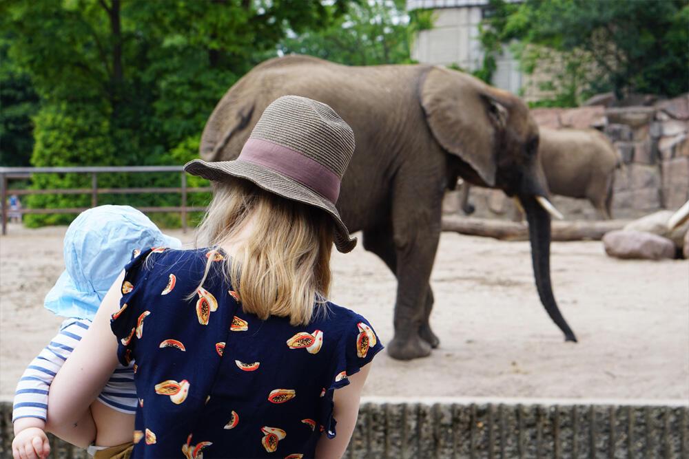 Baby Tierpark Elefant