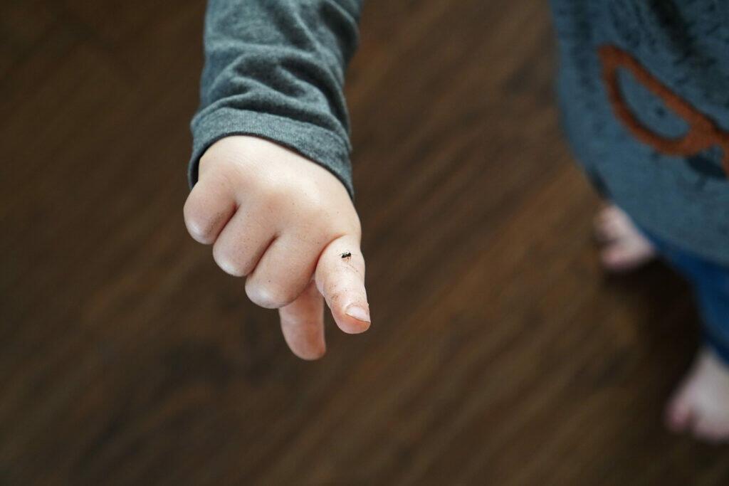 Kleinkind Hand Ameise Kind