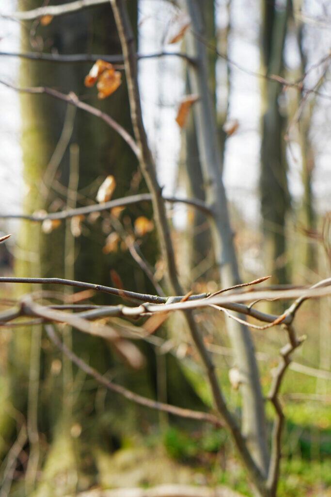 Ast Frühling Wald