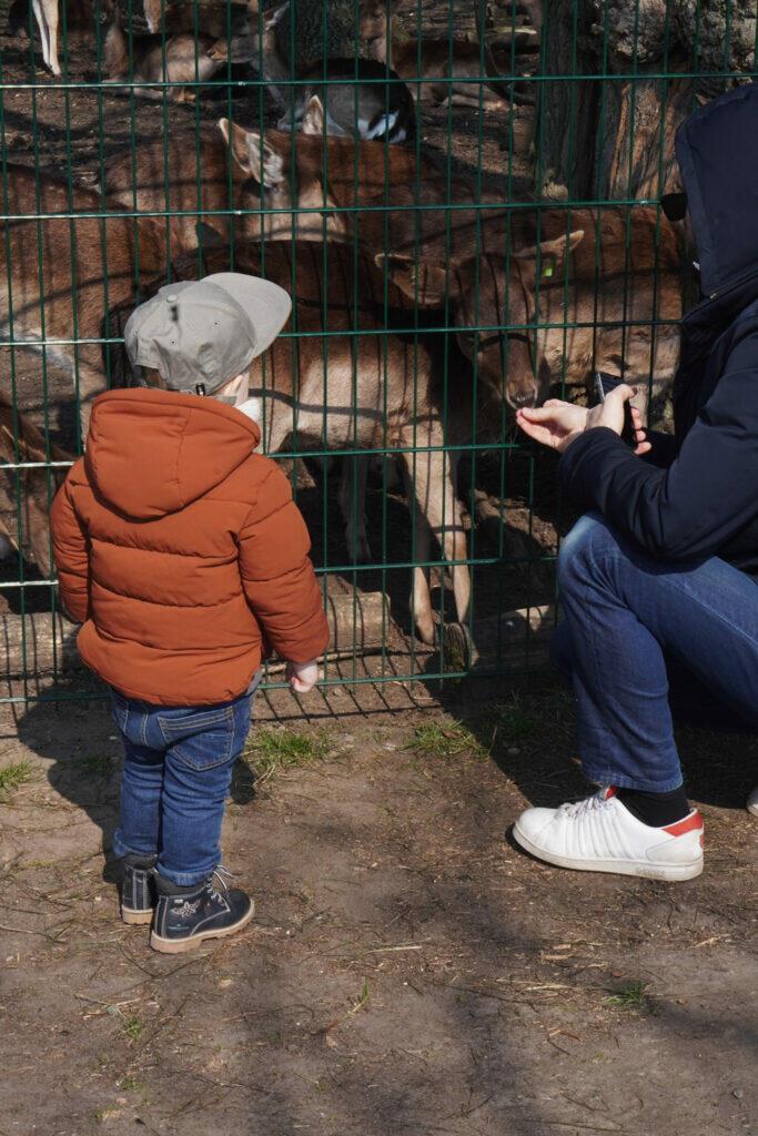 Rehe füttern Kleinkind Junge Rehgehege Wildgehege