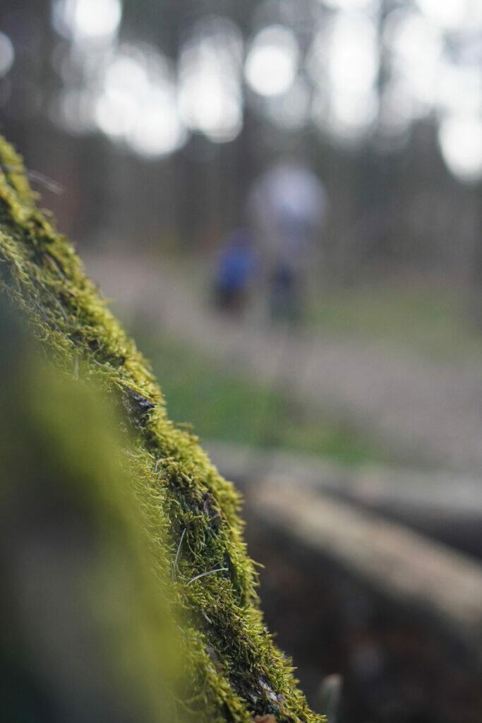 Wald Moos Baumrinde Nahaufnahme